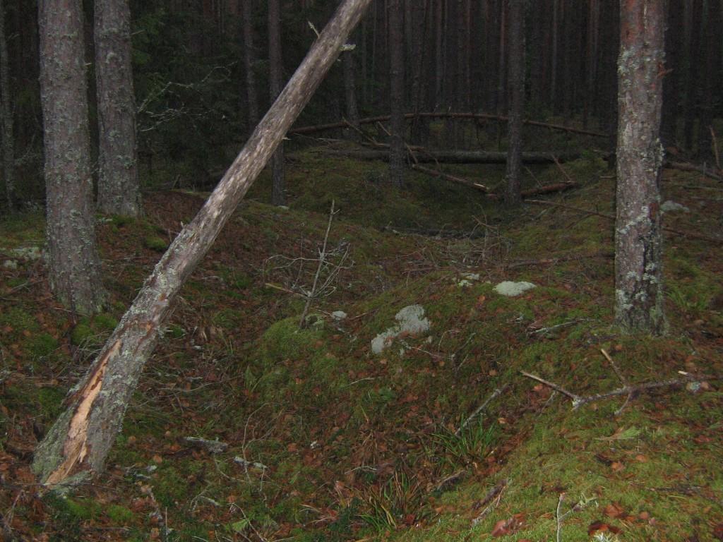Vaade pikkade kääbaste alale, süvendite jäljed pärinevad 20. saj 20-ndatest aastate kaevamistest. Foto: Viktor Lõhmus, 20.11.2013.