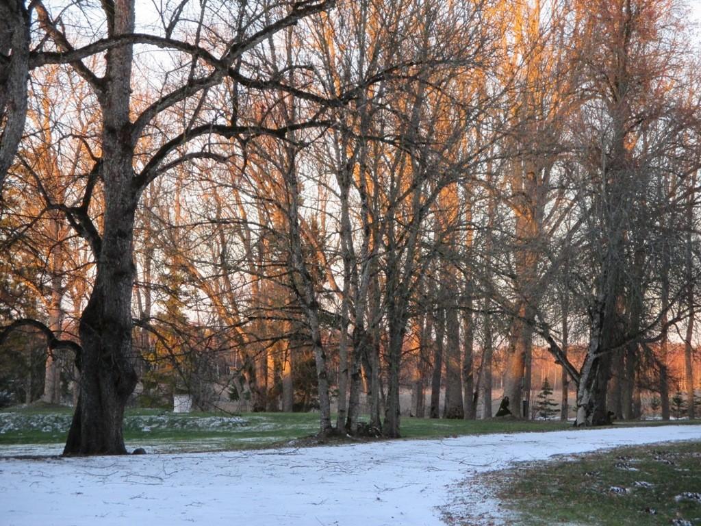 Järlepa mõisa park, peahoonest loode- ja läänesuunas asuv ala. K. Klandorf 02.12.2013.