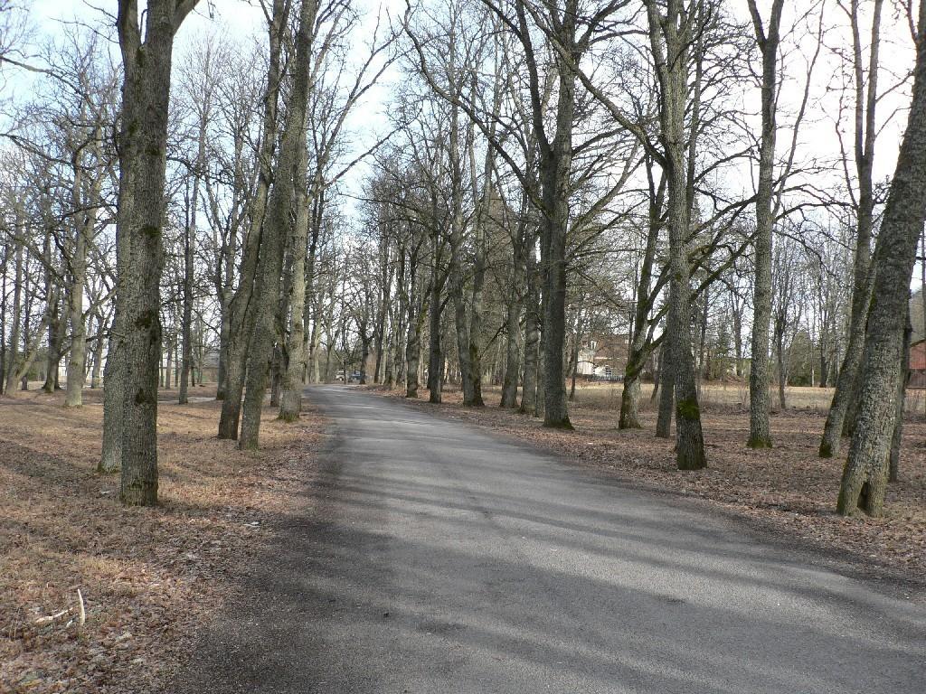 Koigi mõisa allee  Autor Tavo Tamm  Kuupäev  14.02.2008