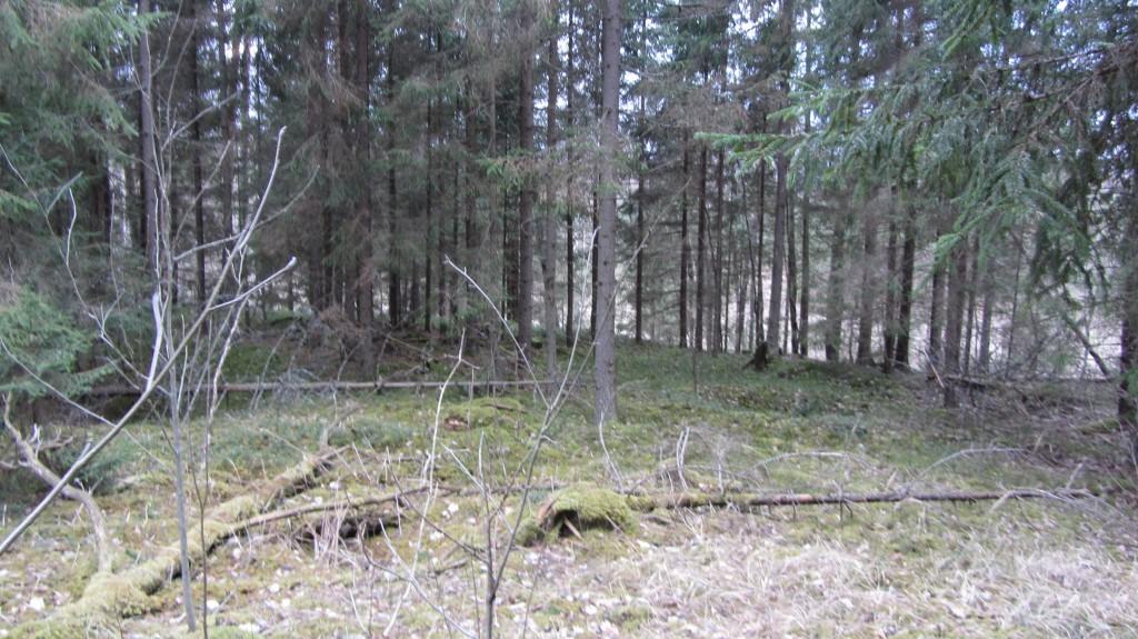 """Kalmistu """"Laulatusemägi"""" reg nr 13089. Foto: Ingmar Noorlaid, 19.02.2014."""