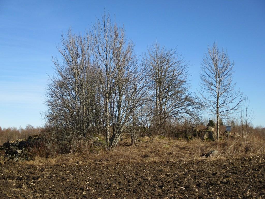 Kivikalme reg nr 12096 Põlli külas, vaade lõunast. Foto: K. Klandorf, 11.03.2014.
