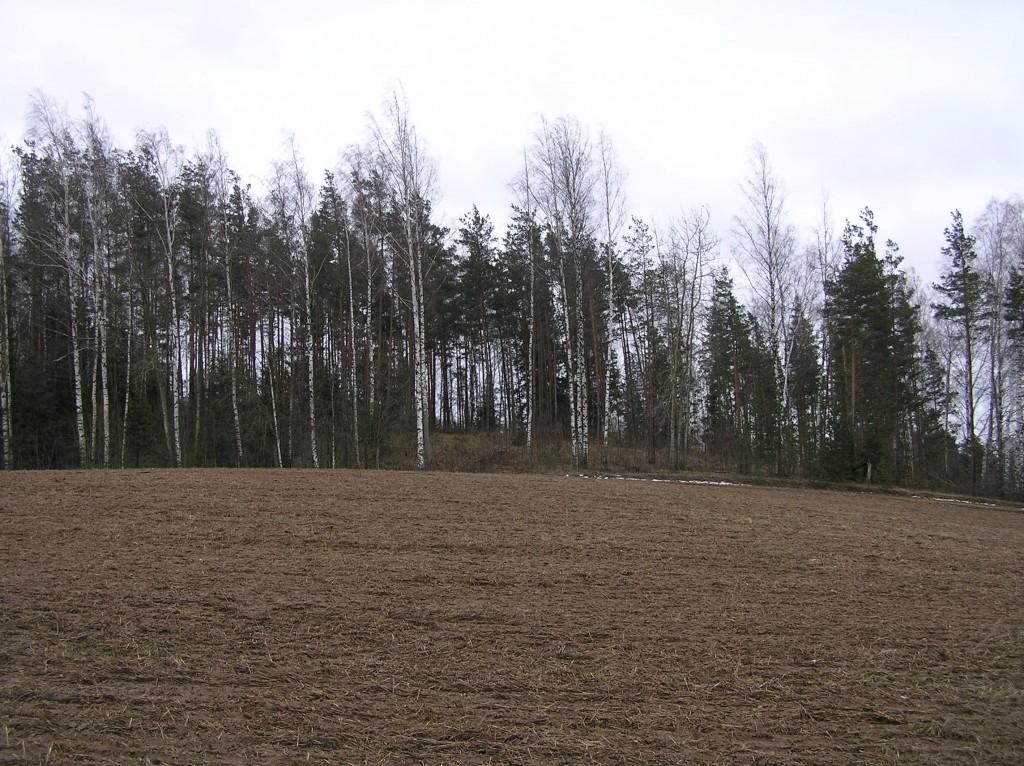 Pildistatud edelast. Foto: Martti Veldi, 22.02.2008.
