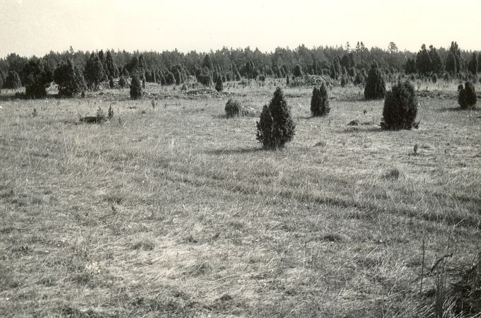 Kalmeväli - edelast. Foto: E. Väljal, 16.05.1984.