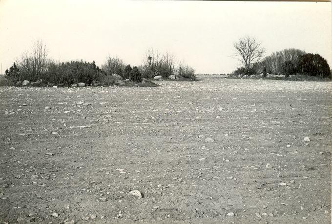 Kivikalmed - läänest. Foto: E. Väljal, 05.05.1983.
