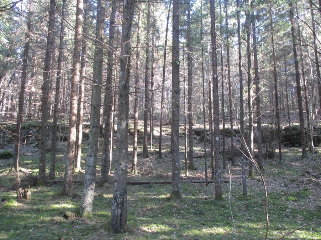Linnus reg nr 12145 (Raikküla Pakamägi), vaade loodest. Foto: K. Klandorf, 26.03.2014.