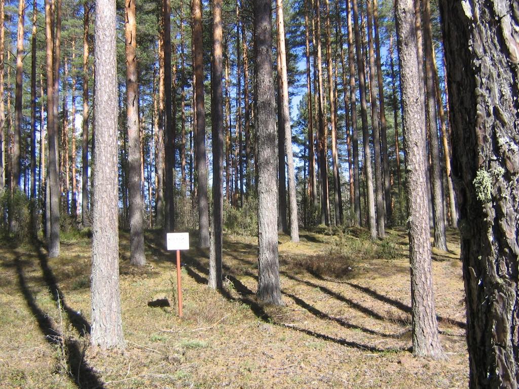 Tähise taga asuval kõrgendikul paikneb kalmistu kiviristiga. Kevad 2014. Foto: Viktor Lõhmus, 04.04.2014.