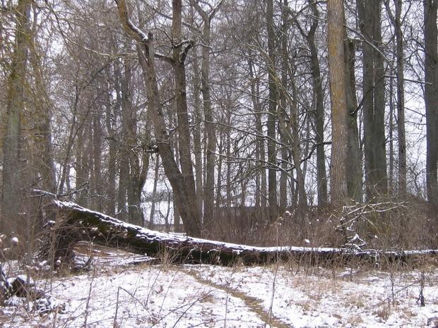 Einmanni mõisa park : vaade pargis  Autor Anne Kaldam  Kuupäev  17.03.2008