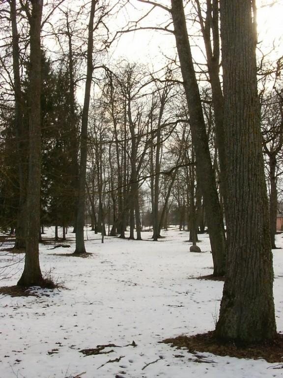 Kurtna mõisa park  Autor Tõnis Taavet  Kuupäev  10.03.2008