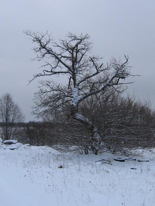 Foto: Ulla Kadakas, 05.03.2008.