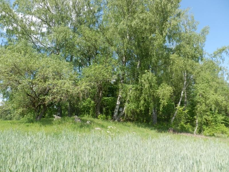 Kalmistu. Foto: Anne Kivi, 26.05.2014.