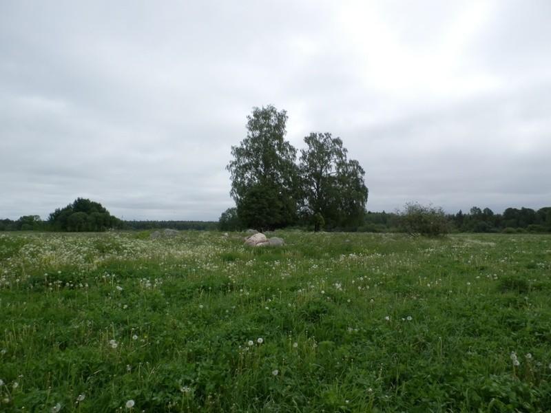Kivikalme. Foto: Anne Kivi, 01.06.2014.