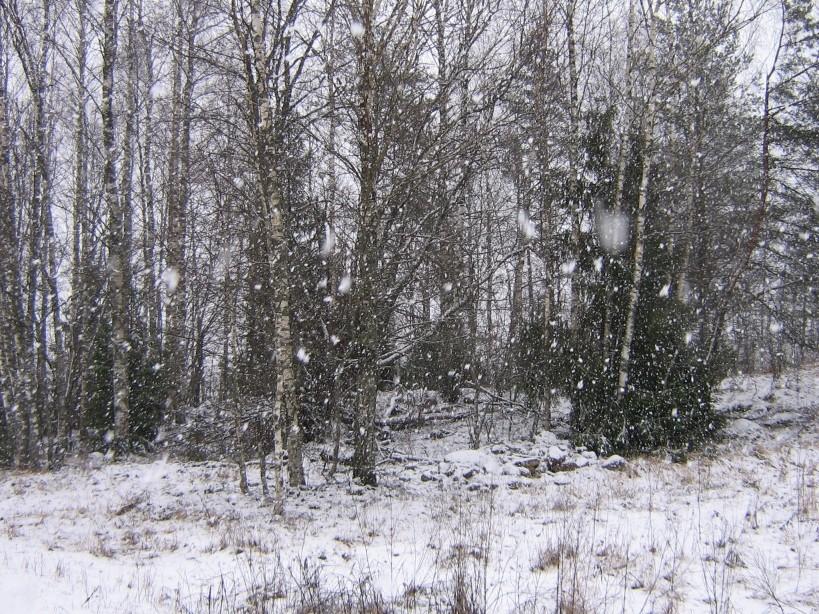 Vaade itta. Foto: Ulla Kadakas, 29.02.2008.