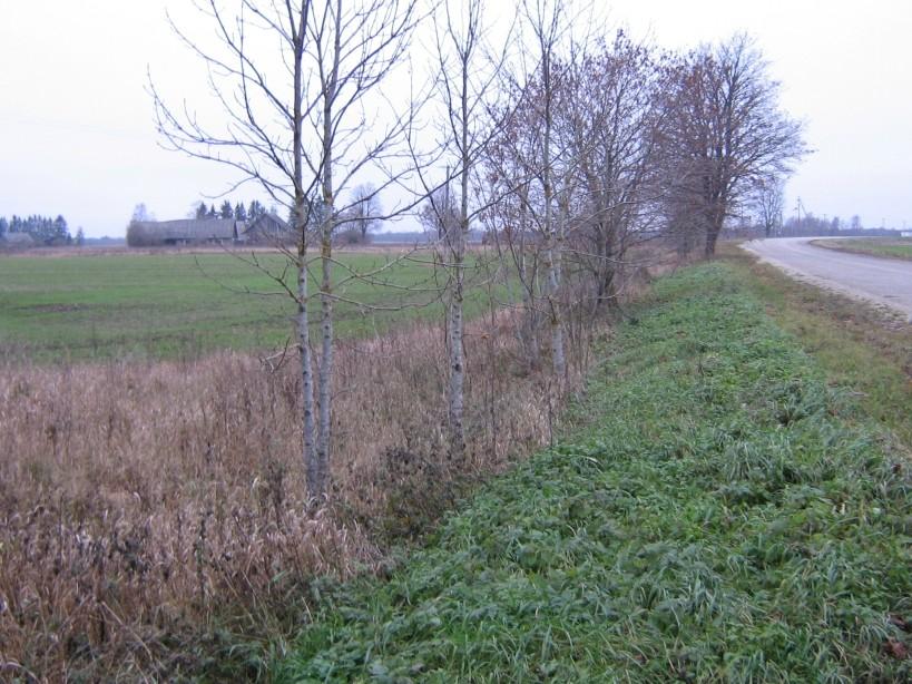 Vaade maanteelt loodesse  Autor Ulla Kadakas  Kuupäev  26.10.2007