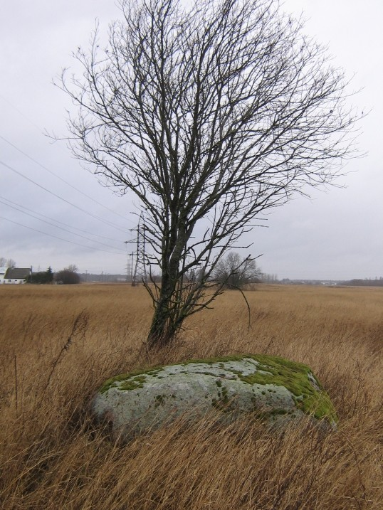 Autor Ulla Kadakas  Kuupäev  22.02.2008
