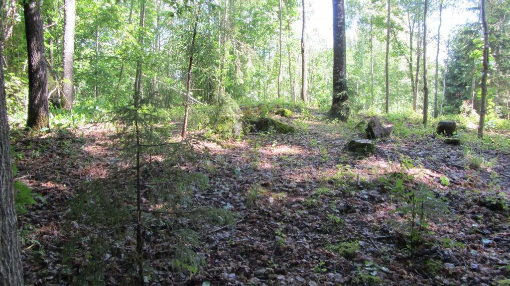 Kivikalme reg nr 13164. Foto: Ingmar Noorlaid, 17.06.2014.