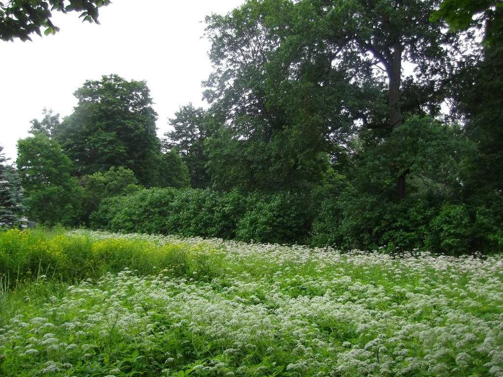 Vaade teelt pargi põhjaosa puistule. Foto Silja Konsa 02.07.2014