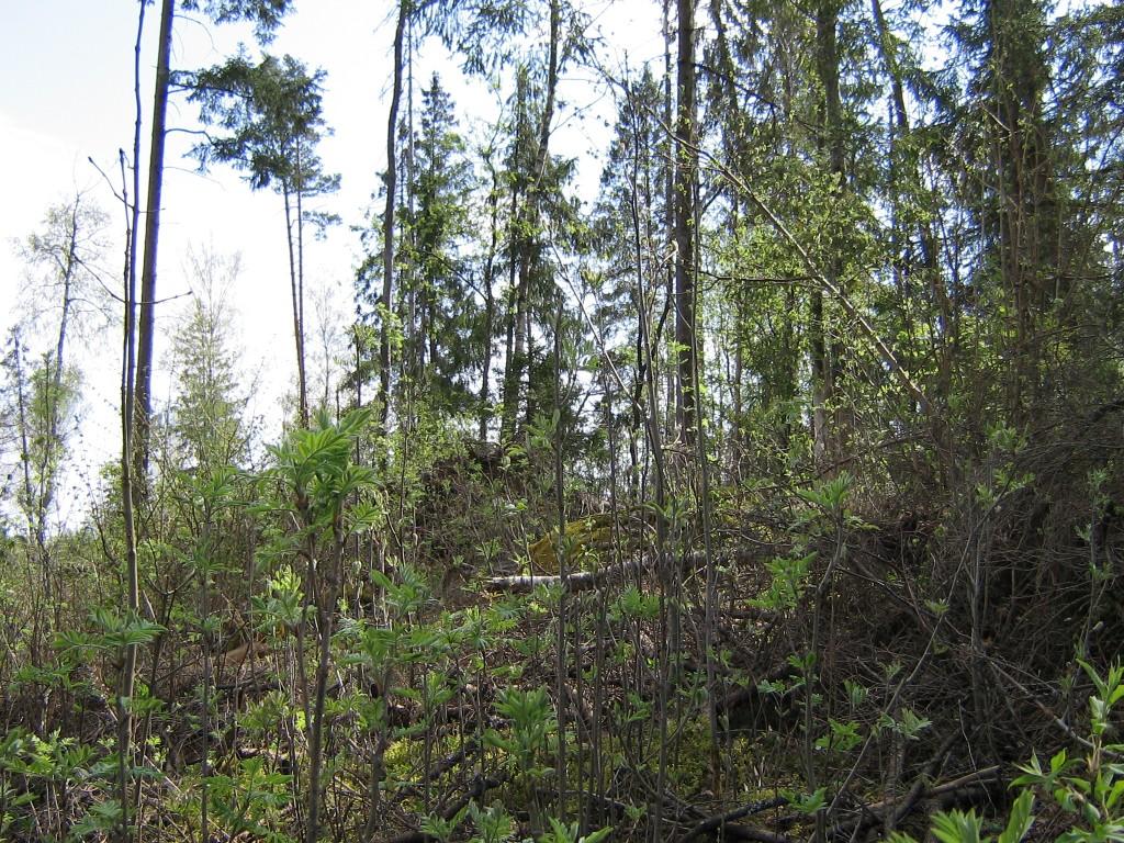 """Kalmistu """"Surnumägi"""". Foto: A. Kivi, 02.05.2008."""