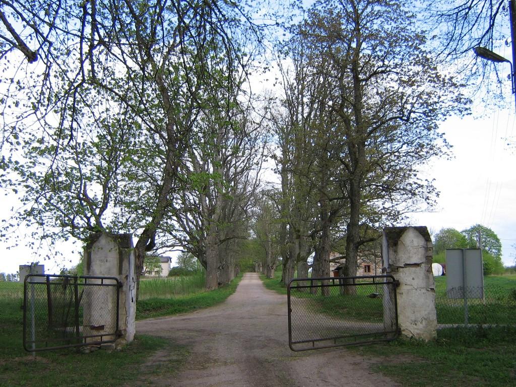 Vaade alleele mõisa peaväravast Autor Anne Kivi  Kuupäev  08.05.2008