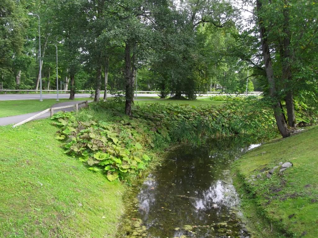 Kaldataimestik. Foto Silja Konsa 02.09.2014