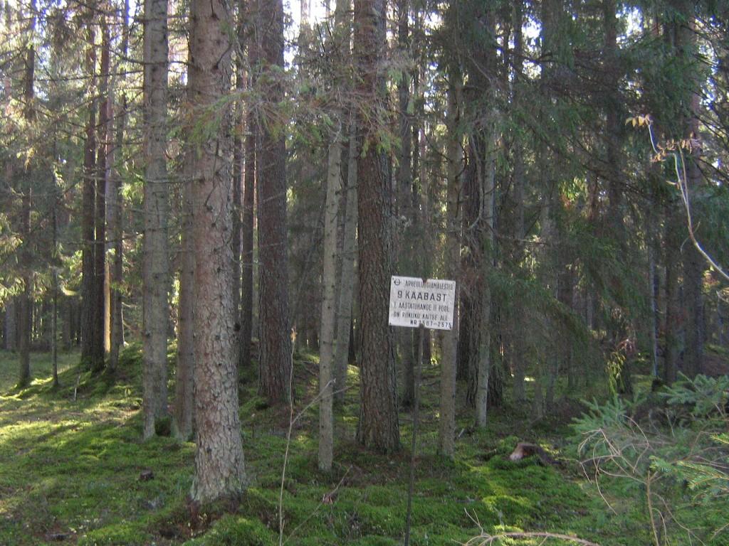 Tähise ja puude taga algab selle üheksase grupi esimene kääbas suunaga lõunasse. Foto: Viktor Lõhmus, 17.10.2014.