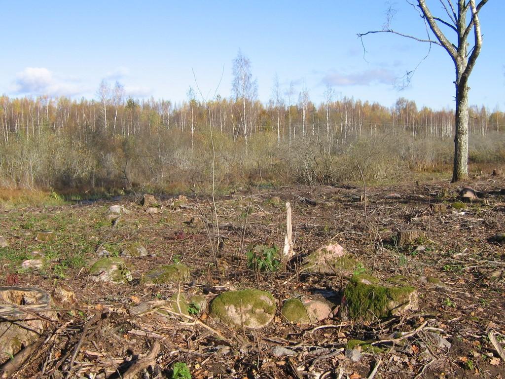 Kivikalme säilinud osadega on metsaraie arvestanud. Foto: Viktor Lõhmus, 17.10.2017.
