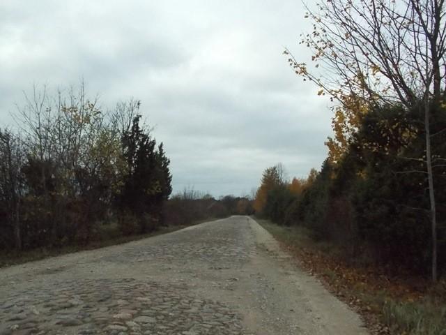 Truubijkoht (p)innatud kruusaga. Foto: Rita Peirumaa. 22.10.2014