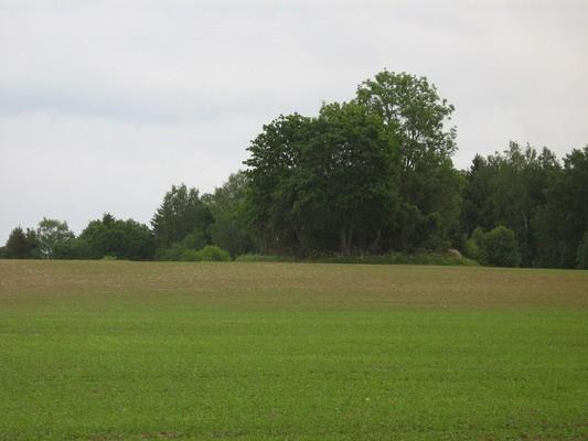 Kivikalme reg nr 10281. Foto: I. Raudvassar, 12.06.2008.