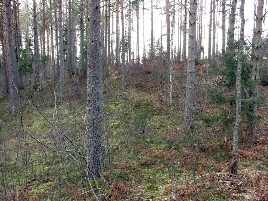 Vaade kalmistu alale kirde suunast. Foto: Kersti Siim, 20.11.2014.