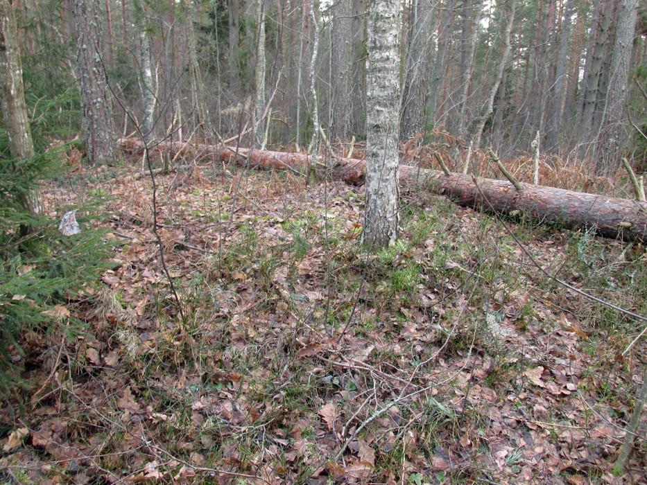 Kääbas. Foto: Kersti Siim, 20.11.2014.