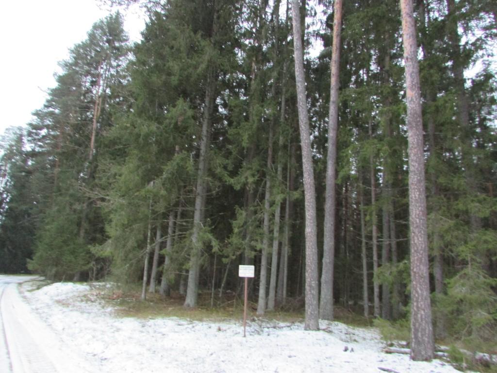 Vaade kalmistu alale tee pealt. Foto: Viktor Lõhmus, 03.12.2014.