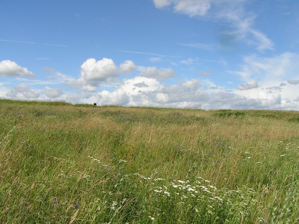Asulakoht ja kalmistu vaadatuna Emajõe poolt, lõunast. Foto: Martti Veldi, 22.07.2008.