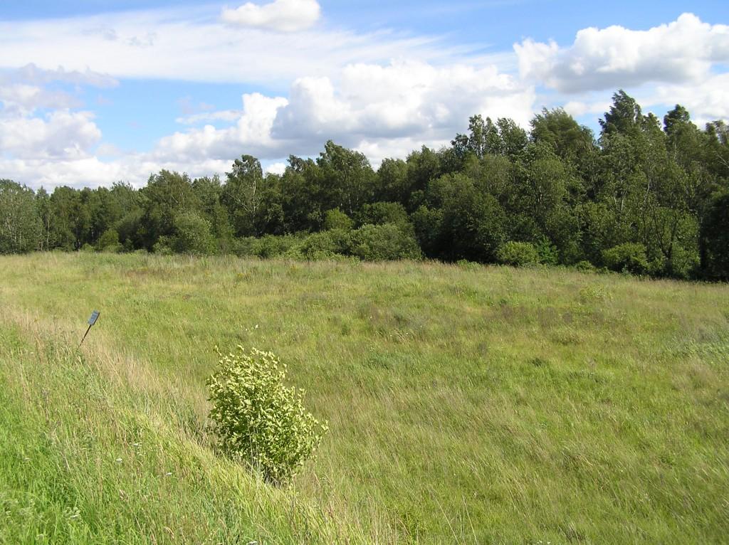 Kalmistu Luunja-Kavastu teelt. Foto: Martti Veldi, 22.07.2008.