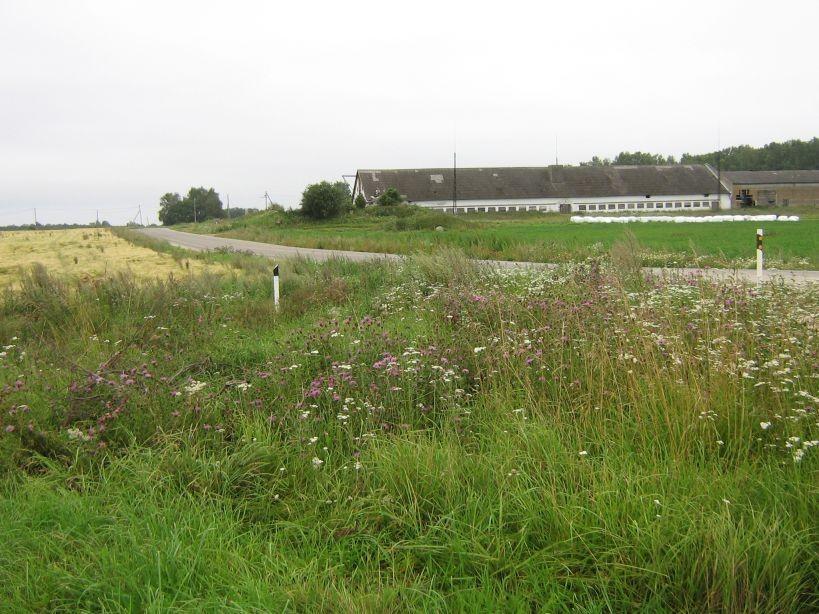 Kiili valla õpilasmalev paigaldas mälestisele tähised.  Autor Ulla Kadakas  Kuupäev  11.08.2008