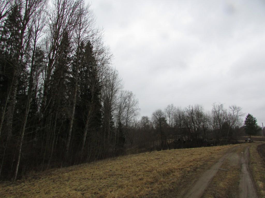 Asulakoha lõunaosa on kaetud sega metsaga  (kased, männid) , veel edasi algab Võhandu  ürgoru kallas. Viktor Lõhmus 01.04.2015