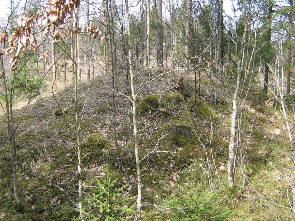 Kääpal kasvavad hõredad puud. 22.04.2015 Viktor Lõhmus