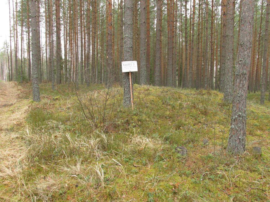 Kääbastik. Foto Kersti Siim, 1.04.2015.
