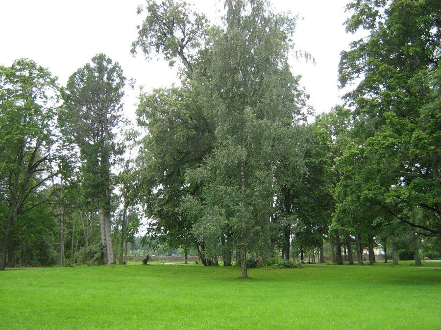esiväljak  Autor Anne Kivi  Kuupäev  21.08.2008