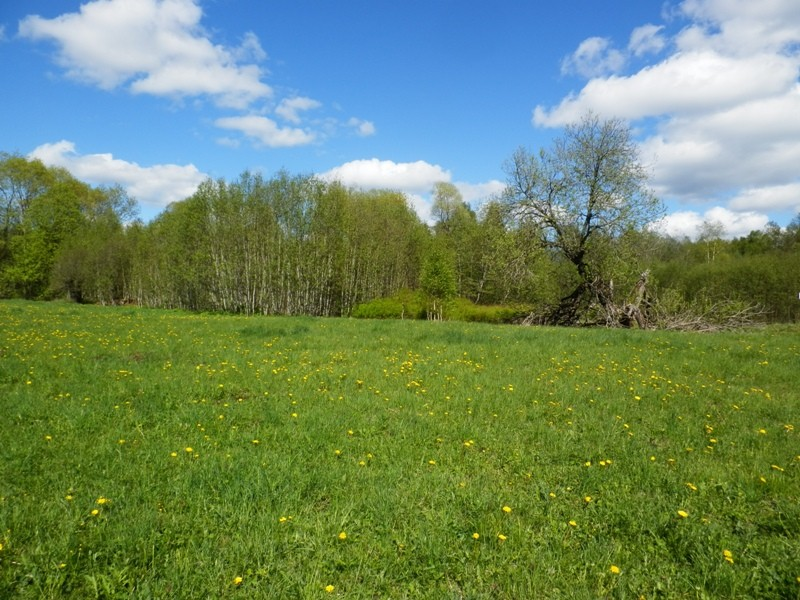 """Pronksiaja kalmistu ja asulakoht """"Kivisaare""""  Foto Anne Kivi 19.05.2015"""