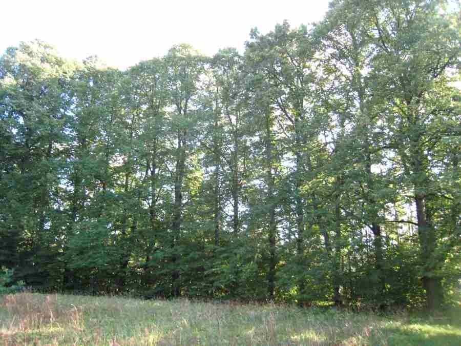 Audla mõisa pargi pärnaallee. Foto: R. Peirumaa. Kuupäev  04.09.2008
