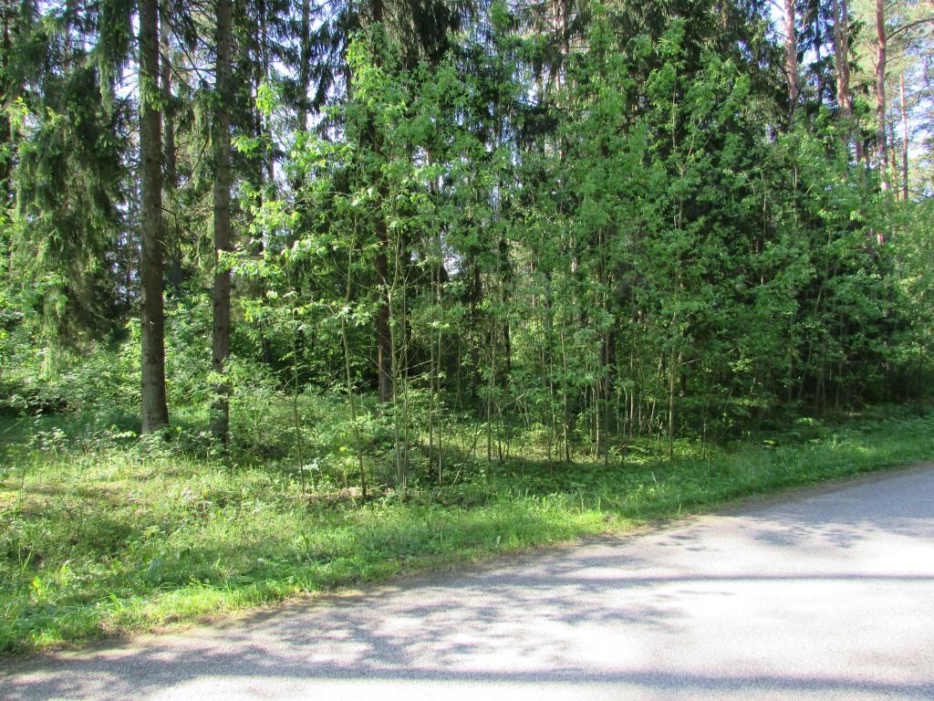 Kalmistu 18433 Kolga-Uuri teelt kirdest. Foto 1.06.2015, A.Kivirüüt.
