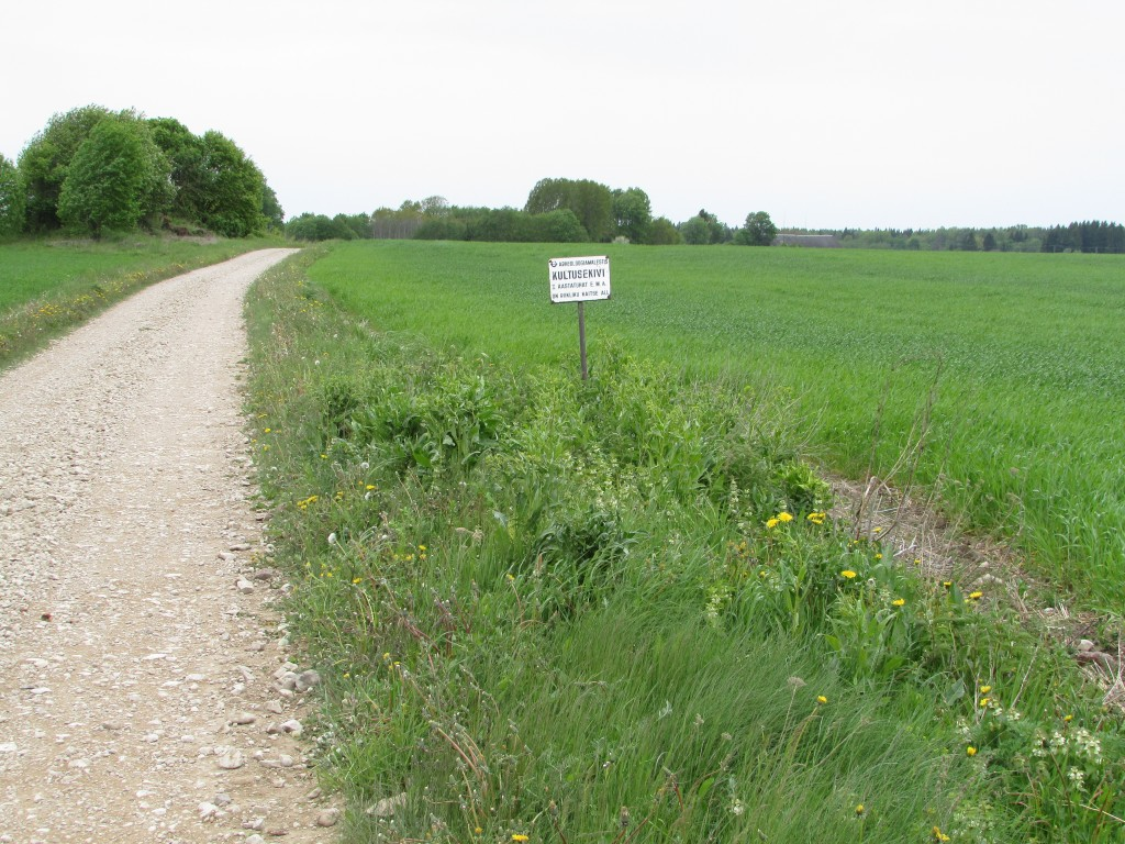 Vaade mälestise asukohale pikki teed, ida poolt.  1. juuni 2015. A. Rudi