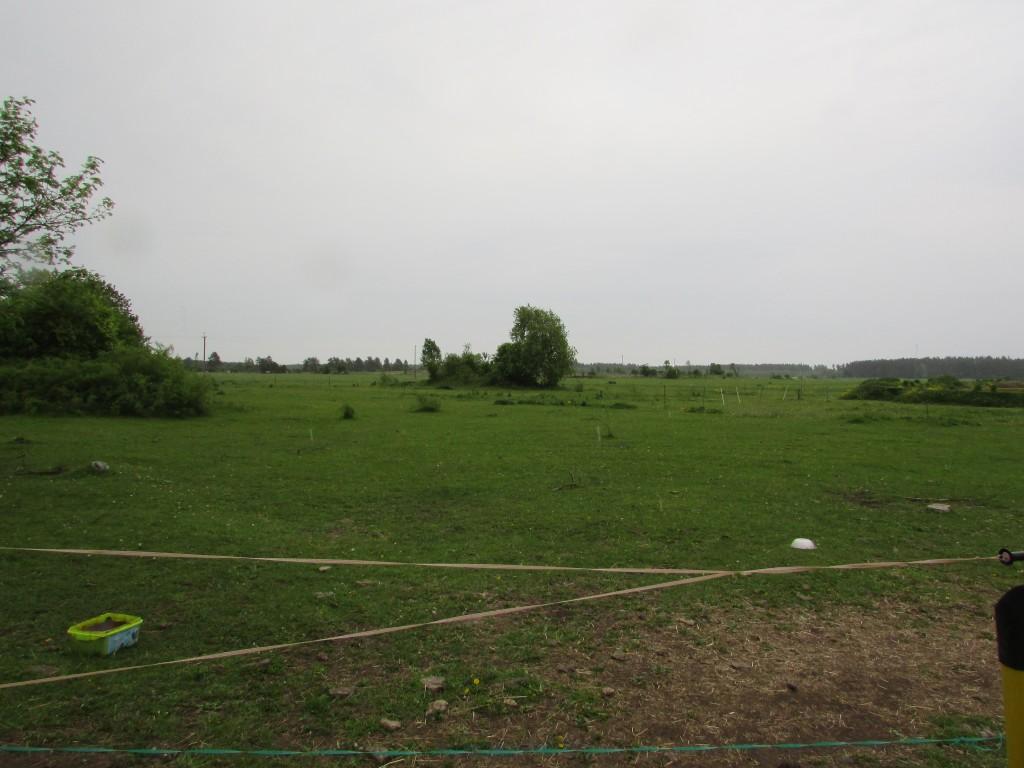 Kalme reg-nr 18446 - kivine võsastunud künkake keset hobusekoplit. Foto 1.06.2015, A.Kivirüüt.
