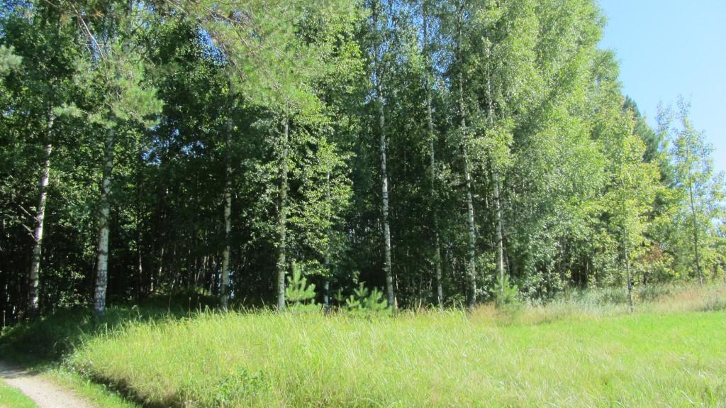 Kalmistu re-nr 13024, 6.08.2015. Foto: Ingmar Noorlaid