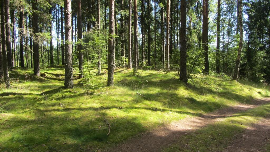"Kalmistu ""Kabelimägi"" reg-nr 13025, 6.08.2015. Foto: Ingmar Noorlaid"