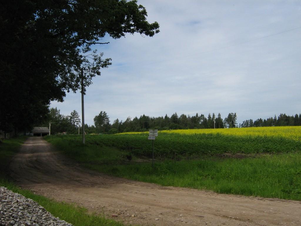 Vaade asulakohale talu- ja külatee ristmikult. Foto: Anne Kivi, 20.07.2008.