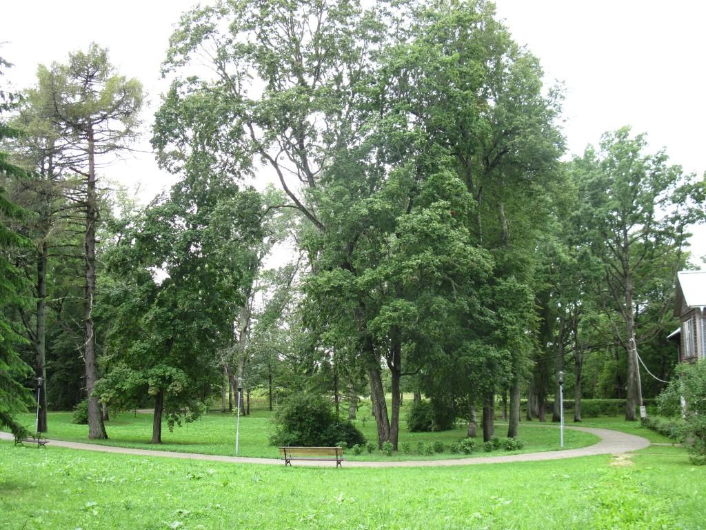 Pala mõisa park, kivisillutisega pargitee Foto: Sille Raidvere Aeg: 26.08.2014