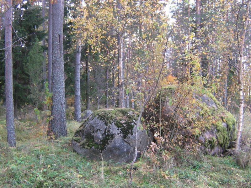 Holvandi kääpad, nende 2 suure kivi taga algavad. Foto: Viktor Lõhmus, 08.10.2008.
