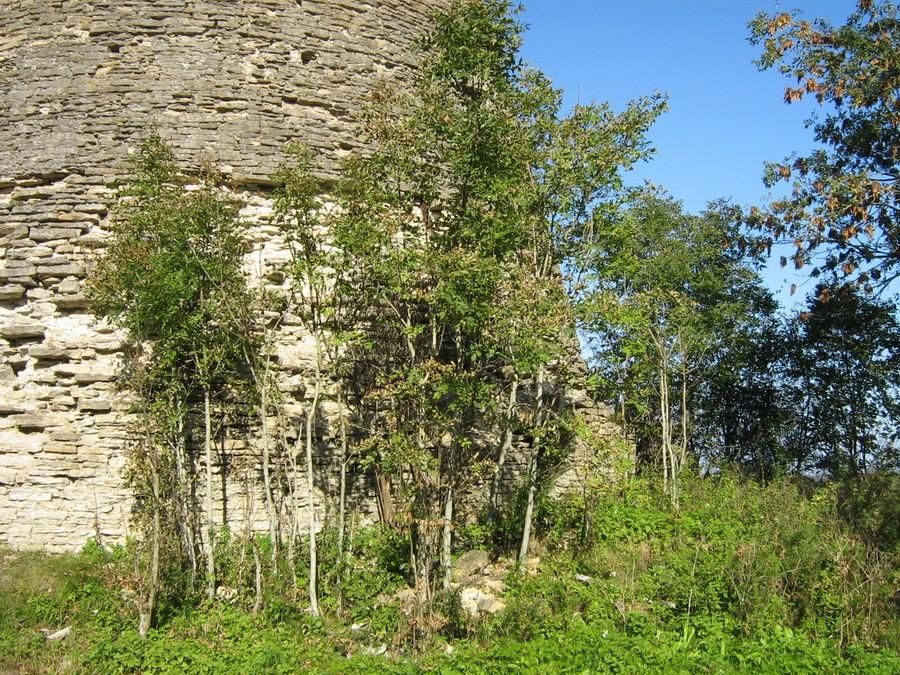 Seina ääres kasvavad puud  Autor Kalli Pets  Kuupäev  24.09.2008