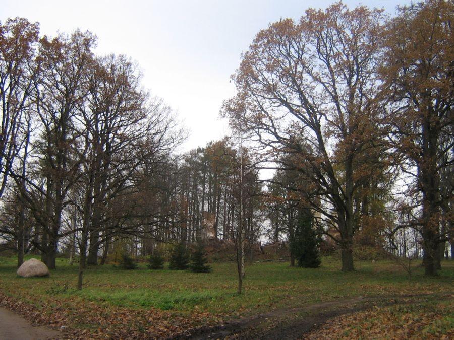 Autor Reelika Niit  Kuupäev  29.10.2008