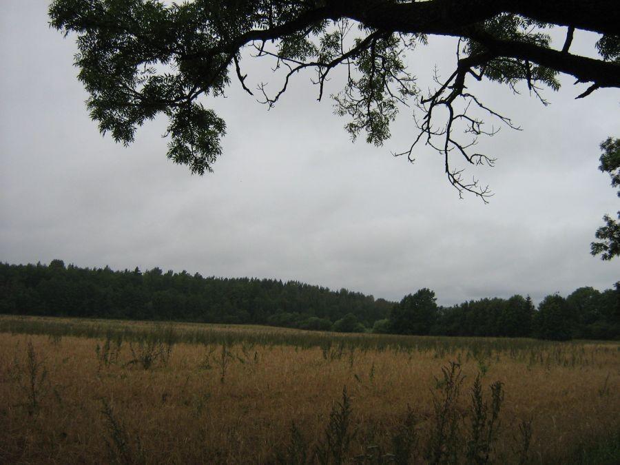 Asulakoht reg nr 13226. Foto: Anne Kivi, 27.08.2008.